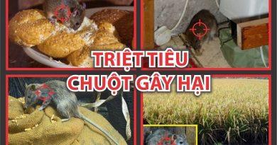 thuoc-diet-chuot-storm1